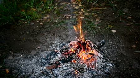 fireside : Beautiful campfire in the dark. Located on the right side of the frame. You can see the green grass and yellow leaves. Warm, hot, burning flames. Stock Footage