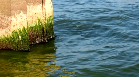 oluklu : The moss wall is green. Calm water and Sunny weather. The breakwater protects the shore from the water.