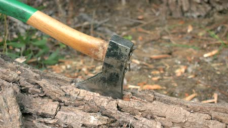 The ax sticks into the felled tree. The ax has a green handle, close-up video. The view from the side. Stock Footage