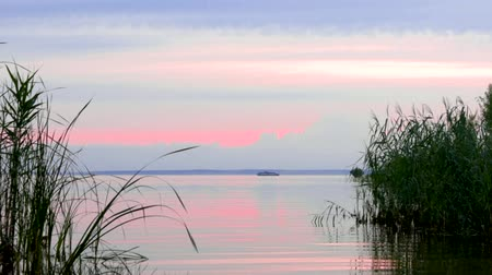 Passenger liner floating on the horizon at sunset. View from the riverbank between the reeds. Beautiful pink sunset.