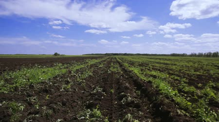 cultivo : Agriculture field Stock Footage