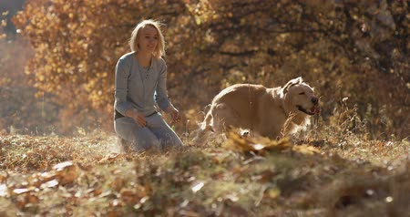 yay : Young female playing with labrador golden retriever dog in park, slow motion Stok Video