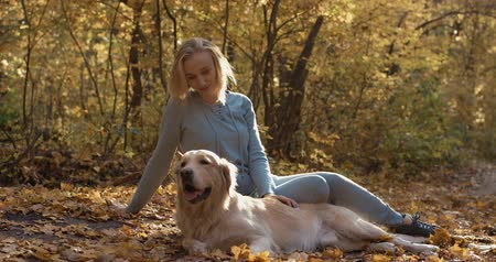 autumn leaves : Young female playing with labrador golden retriever dog in park, slow motion Stock Footage