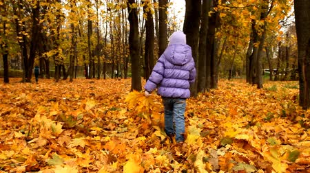 проливая : A child walks in autumn park Стоковые видеозаписи