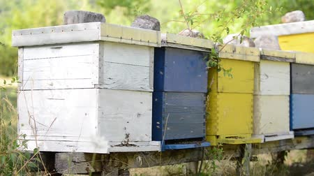 pente : honey bee home in nature