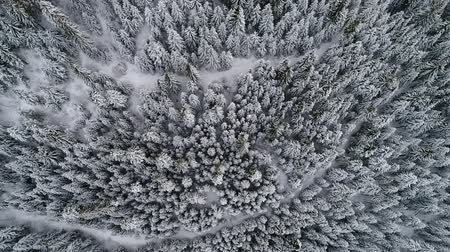 iszapos : aerial footage of winter forest