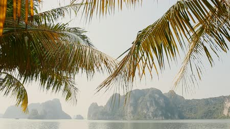 north vietnam : Ha Long city promenade with palm trees. Rocks and mountains. Vietnam.