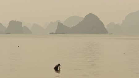 fishermen : A fisherman throws fishing nets to the waist in water. Vietnam. Ha Long city. Stock Footage