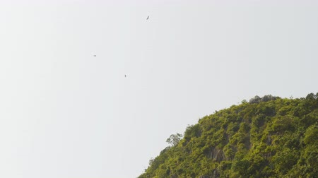 sighted : Eagles flying in the sky near the hill.