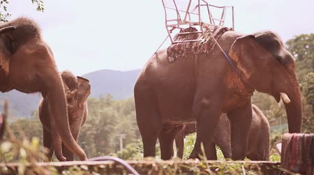north vietnam : Tourist elephants stand on outdoor