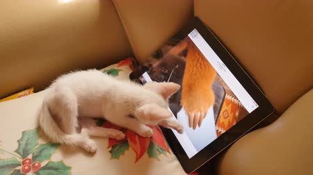 kot i pies : MOSCOW, RUSSIA - JANUARY 1, 2018: The white kitten watches animated films on the tablet.