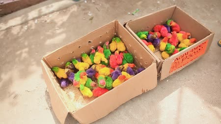 csajok : BANTAYAN, PHILIPPINES - JANUARY 5, 2018: Colorful little chickens in a box in a shopping place of the city of Manila. Philippines.
