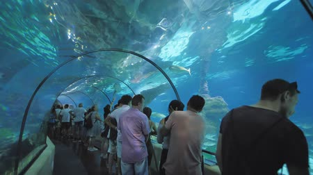 посетитель : Barcelona, Spain - August 5, 2018: Tourists visits Barcelona Aquarium. Aquarium located in Port Vell, a harbor in Barcelona, Catalonia, Spain.