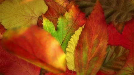 herbst landschaft : Fallende Herbstblätter - animierte realistisch Video Background Loop