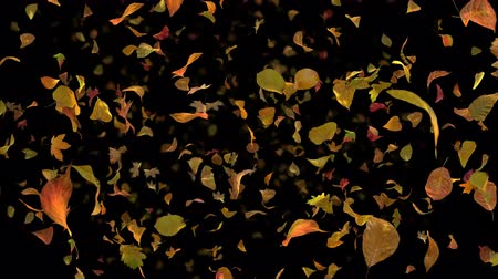 Autumn Fall Leaves Frontal - Black BG - 4k Realistic Falling Foliage Video Background Loop @60fps