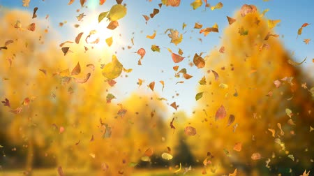 swirling : Autumn Fall Leaves Sideways - 1080p Realistic Falling Leaves Video Background Loop @60fps Stock Footage