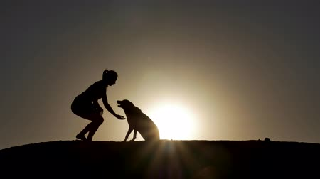 animais e animais de estimação : A silhouette of a young woman and her pet Mix Dog shaking hands at sunset.  With copy-space in sky.
