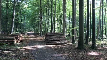 Road through the danish forest near Jyderup, Holbæk