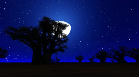 African Savanna at night with the moon, animation