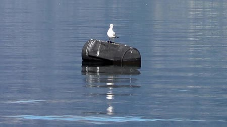 racek : Seagull sunbathing on the buoy Dostupné videozáznamy