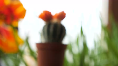 bibe : Zoom in on small cactus with a flower on top in the house