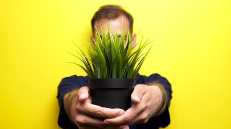 conservação do meio ambiente : Rack focus man showing a pot with grass to the camera on yellow background in studio. Ecology concept. The focus is shifting from his face to the pot than back to him. Stock Footage