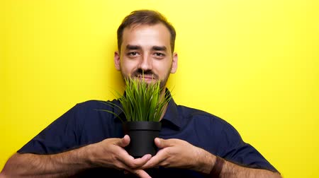conservação do meio ambiente : Man smiling to the camera and showing a pot with green grass over an yellow background. Ecology concept Stock Footage