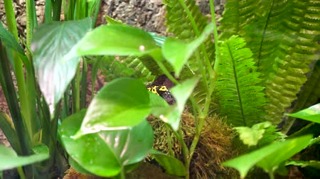 terrarium : The most toxic frog on the planet - small frog at the zoo