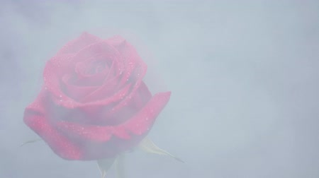színpadi : White dense smoke on a red rose. White smoke covers the frame and blows to a flower.