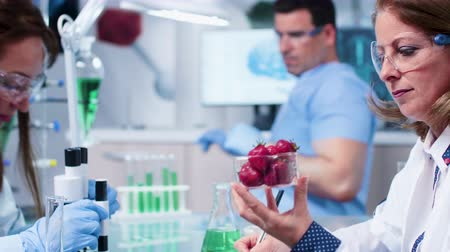 fornada : Female scientist looks at a batch with fruit samples for genetics experiments Stock Footage