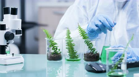 seedlings : Close up shot experimenting on plants with GMO in modern research facility Stock Footage