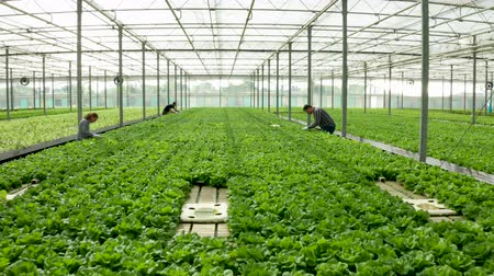 Aerial view of farmers working in a greenhouse
