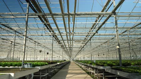 Drone flying in a modern greenhouse for oraganic crop. Modern farming Wideo