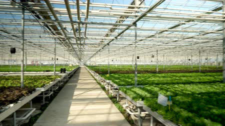 Aerial view with drone flying in a modern greenhouse