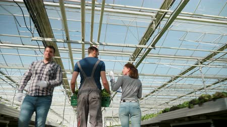 Farmers in a greenhouse with modern technology for growing green salad. Wideo