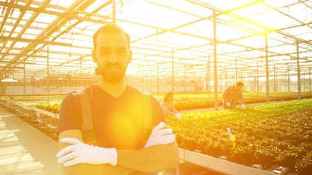commercial cultivation : Smiling young agronomist in a greenhouse with modern technology for growing vegetables.