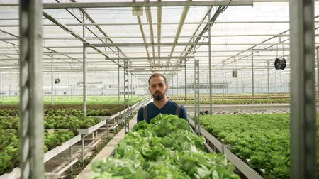 commercial cultivation : Man working in a greenhouse pushing a cart