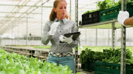 irigace : Agricultural female worker typing data on tablet of organic green salad