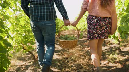 grape basket : Back view close up of man and woman carrying a basket with grapes in a beautiful vineyard