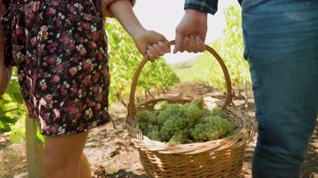 лоза : Man and woman carrying a big basket with white grapes, front view, slow motion shot Стоковые видеозаписи
