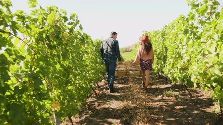 şarap : Man and woman carrying two baskets with grapes in a vineyard Stok Video