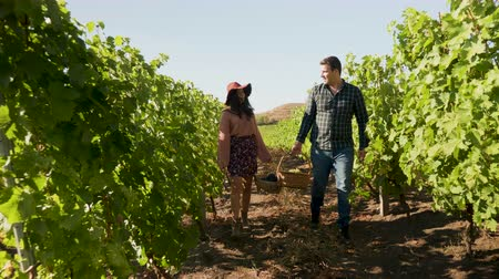 grape basket : Smiling couple carrying two baskets with grapes in them in beautiful vineyard