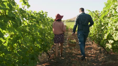 copas de vino : Couple with glasses of wine and a basket with grapes walking in a vineyard, slow motion shot
