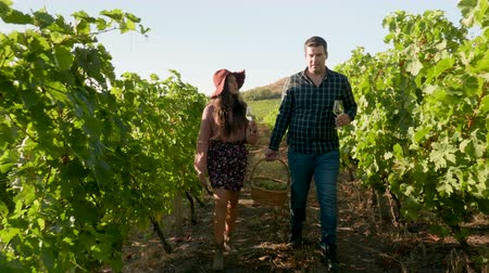 bílé víno : Beautiful couple with glasses of wine in hands and a basket of grapes walking in a vineyard
