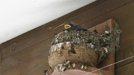 nyel : Birds in nest