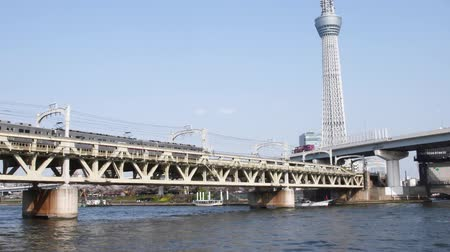 Sumida River in the spring