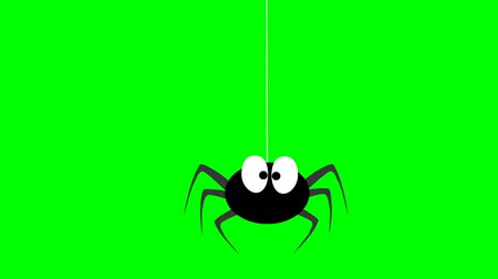 caracol : Cute insects. Spider, butterfly, snail, snake, ladybug and pond skaters on a green screen Stock Footage