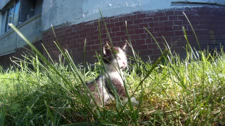 stroking feral kittens in a grass on the street