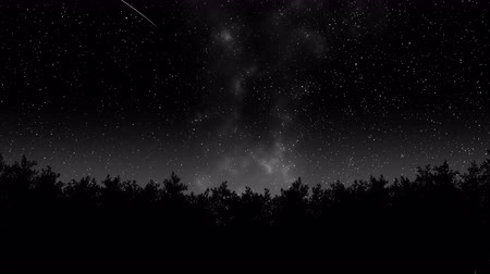 desenhada à mão : Timelapse of stars moving over pine trees. Stock Footage