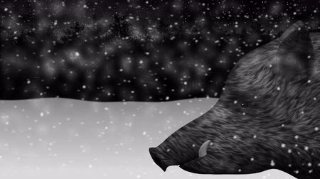 Wild boar new year 2019 in winter forest animation Stock mozgókép
